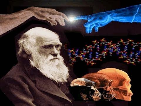 Происхождение человека: эволюционная теория Чарльза Дарвина