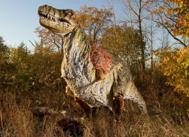 Тираннозавр: останки