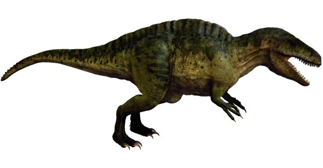 Хищные динозавры: акрокантозавр