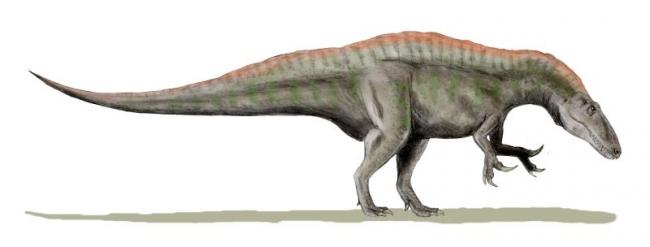 Хищные динозавры: размеры акрокантозавра