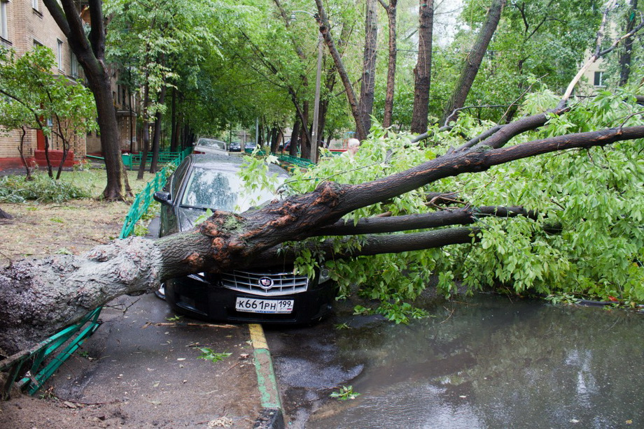 последствие урагана(поваленные