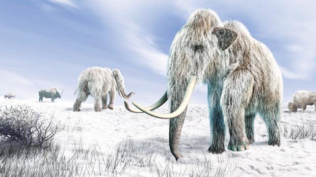 Ледниковый период и мамонты