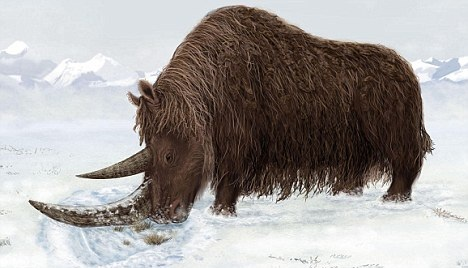 Ледниковый период - останки древнего носорога