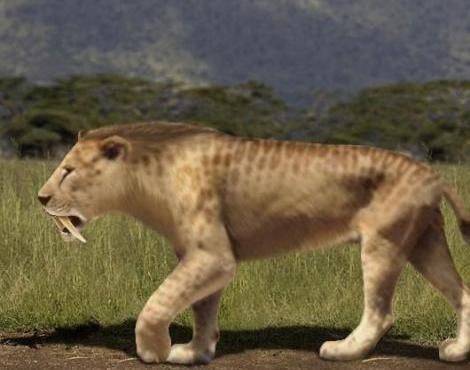 Саблезубый тигр: цвет
