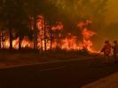 Природные катастрофы: лесные пожары
