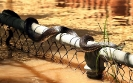 Наводнения в Австралии: нашествие рептилий