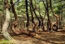 Аномальные зоны России: Танцующий лес