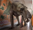 Доисторические хищники: горгонопс