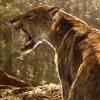 Саблезубый тигр - смилодон