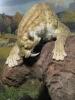 Саблезубый тигр - плотоядное животное