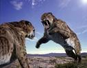 Саблезубый тигр: стаи