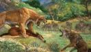 Саблезубый тигр: клыки