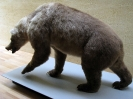 Пещерный медведь