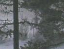 Инопланетяне - снимок с Аляски