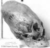 Инопланетяне - снимок с черепом
