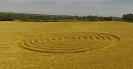 Круги на полях, созданные муравьями