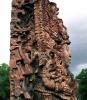 Боги майя: мировое древо Сейба