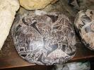 Артефакты древних цивилизаций: камни Ика