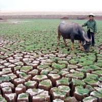 Засуха в Китае: бедствие по банальным причинам