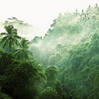 10 необъяснимых загадок джунглей