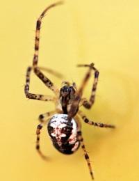 Арахнофобия – страх пауков