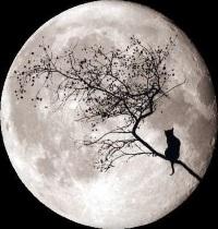 Луна: спутник с загадками