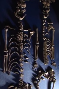 скелеты Дарема