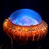 10 странных обитателей океана, похожих на пришельцев с другой планеты