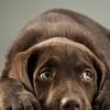 Кинофобия – боязнь собак
