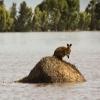 Наводнения в Австралии: воды мало, а затапливает…