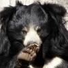 Пять наводящих ужас серийных убийц из животного мира