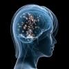 Программа для развития мозга: правда или вымысел?