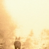 Душа животных после смерти – куда уходят питомцы?